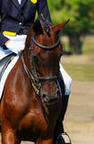 Cavallo di Dressage fotografie stock libere da diritti