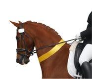 Cavallo di Dressage con il nastro giallo Fotografia Stock Libera da Diritti
