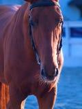 Cavallo di eclipse Fotografie Stock
