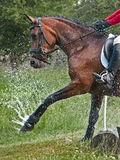 Cavallo di Eventing Immagine Stock