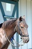 Cavallo di fino di Paso Fotografia Stock Libera da Diritti