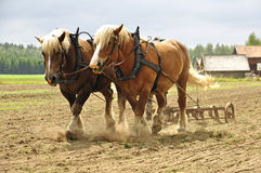 Cavallo di funzionamento Immagini Stock Libere da Diritti