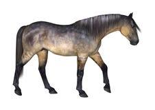 Cavallo di Grulla su bianco Immagine Stock Libera da Diritti