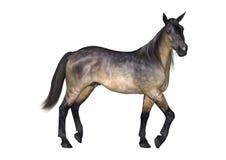 Cavallo di Grulla su bianco Fotografia Stock