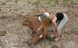 Cavallo di incidente Fotografia Stock