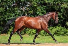 Cavallo di instabilità Fotografie Stock