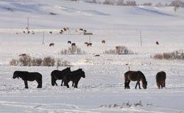 Cavallo di inverno Fotografia Stock Libera da Diritti