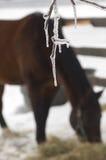 Cavallo di inverno Fotografie Stock
