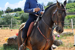 Cavallo di lavoro di equitazione Immagini Stock Libere da Diritti