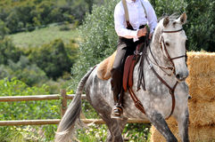 Cavallo di lavoro di equitazione Fotografia Stock Libera da Diritti