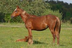 Cavallo di lavoro sull'erba Fotografia Stock Libera da Diritti