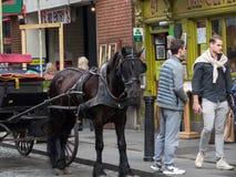 Cavallo di marrone scuro legato al trasporto fuori di un pub in tempio Antivari, Dublino, Irlanda fotografia stock libera da diritti