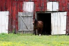 Cavallo di Nashville   Fotografia Stock Libera da Diritti