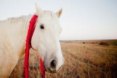 Cavallo di Natale immagini stock libere da diritti