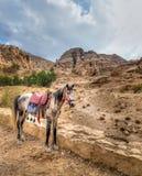 Cavallo di PETRA Fotografie Stock Libere da Diritti
