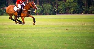 Cavallo di polo sul campo Fotografie Stock Libere da Diritti