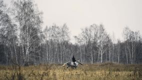 Cavallo di Rider Riding A del maschio Equitazione sul fiield con la foresta di autunno video d archivio