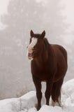 Cavallo di risata Fotografia Stock