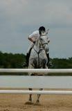 Cavallo di salto Fotografia Stock Libera da Diritti
