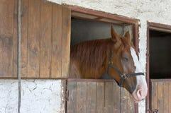 Cavallo di sonno nella stalla Fotografia Stock Libera da Diritti