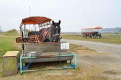 Cavallo di trasporto, Kyoto, Giappone Immagini Stock Libere da Diritti