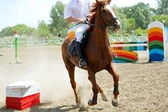 Cavallo di velocità Immagini Stock Libere da Diritti