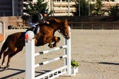 Cavallo di volo in una concorrenza Fotografie Stock Libere da Diritti