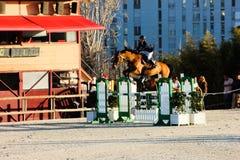 Cavallo di volo in una concorrenza con luce stupefacente Immagini Stock