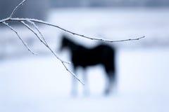 Cavallo dietro la filiale Fotografia Stock Libera da Diritti