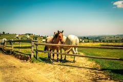 Cavallo dietro la rete fissa Immagini Stock