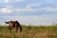 Cavallo diritto Fotografia Stock