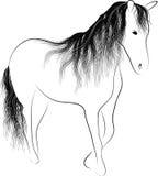 Cavallo diritto della siluetta Immagine Stock