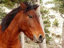 Cavallo diritto isolato immagini stock