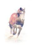 Cavallo Doppia esposizione fotografia stock libera da diritti