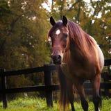 Cavallo drammatico di autunno Fotografia Stock