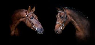 Cavallo due sul nero Immagini Stock Libere da Diritti