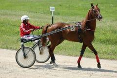 Cavallo durante la corsa di cablaggio Fotografie Stock