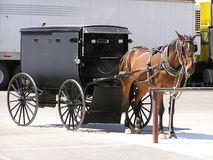 Cavallo e Buggy Immagine Stock