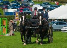 Cavallo e carrello all'esposizione di Westmorland Immagine Stock