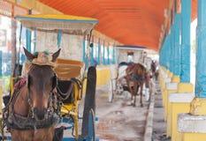 Cavallo e carrozzino caraibici Immagini Stock