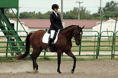 Cavallo e cavaliere Fotografia Stock