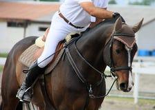 Cavallo e cavaliere Fotografie Stock