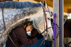 Cavallo e cavaliere immagini stock libere da diritti