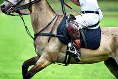 Cavallo e cavaliere Immagine Stock Libera da Diritti