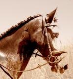 Cavallo e cavaliere astratti del cowboy. Fotografia Stock