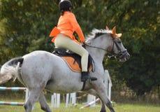 Cavallo e cavaliere che saltano una transenna fotografia stock libera da diritti