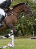 Cavallo e cavaliere che saltano una transenna immagine stock libera da diritti