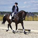 Cavallo e cavaliere di Dressage Fotografie Stock Libere da Diritti