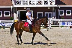 Cavallo e cavaliere di Dressage Immagini Stock
