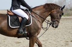 Cavallo e cavaliere di Dressage Fotografia Stock